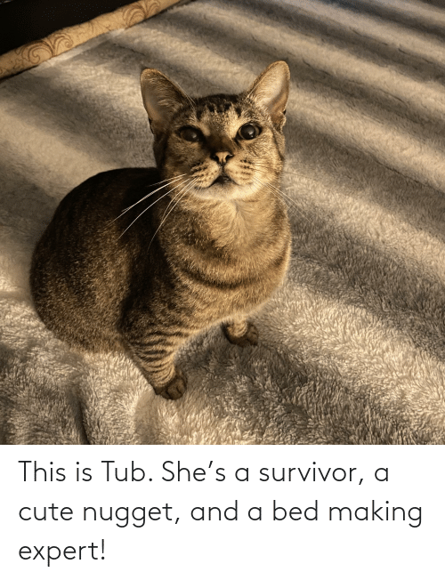 tub: This is Tub. She's a survivor, a cute nugget, and a bed making expert!