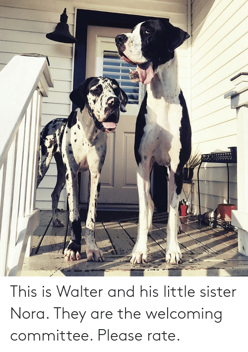 nora: This is Walter and his little sister Nora. They are the welcoming committee. Please rate.