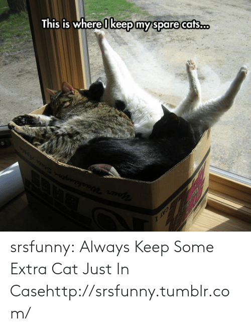 Always Keep: This is where I keep my spare cats.c.  1IAL srsfunny:  Always Keep Some Extra Cat Just In Casehttp://srsfunny.tumblr.com/