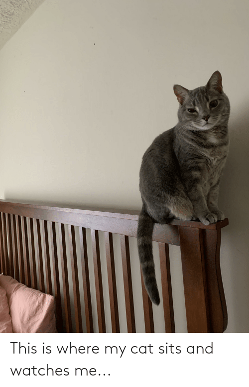 Watches: This is where my cat sits and watches me...
