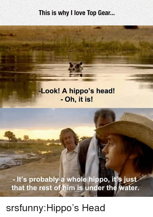 Head, Love, and Top Gear: This is why I love Top Gear.  -Look! A hippo's head!  - Oh, it is!  -It's probably a whole hippo, it's just  that the rest offhim is under the water. srsfunny:Hippo's Head