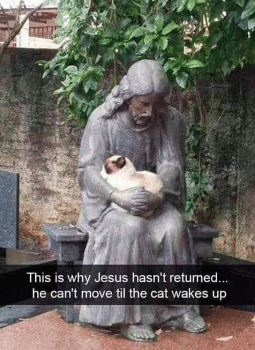 Jesus, Memes, and 🤖: This is why Jesus hasn't returned  he can't move til the cat wakes up