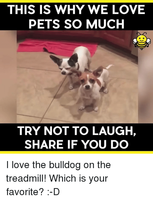 try not to laugh: THIS IS WHY WE LOVE  PETS SO MUCH  TRY NOT TO LAUGH,  SHARE IF YOU DO I love the bulldog on the treadmill! Which is your favorite? :-D
