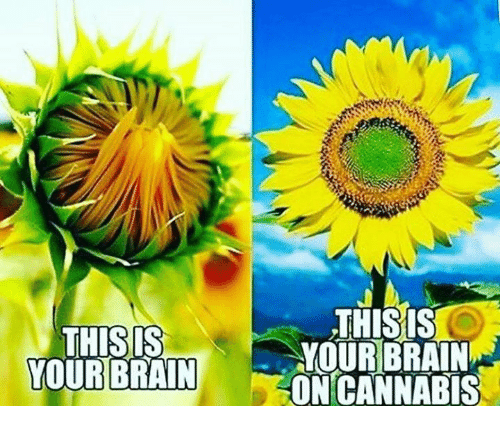 Cannabies: THIS IS  YOUR BRAIN  THISIS  YOUR BRAIN  ON CANNABIS