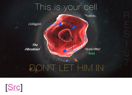 """refuge: This is your cel  Collagen  SI  The  Fibroblast  Hyaluronic  Acid  DONT LET HIM IN <p>[<a href=""""https://www.reddit.com/r/surrealmemes/comments/8bkf7u/this_is_your_last_refuge/"""">Src</a>]</p>"""