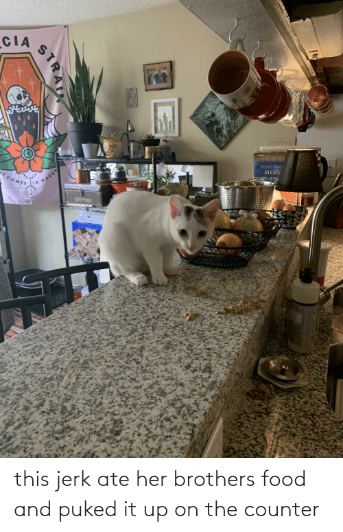 brothers: this jerk ate her brothers food and puked it up on the counter