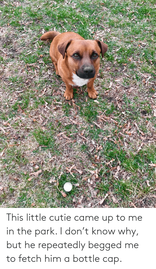 Me To: This little cutie came up to me in the park. I don't know why, but he repeatedly begged me to fetch him a bottle cap.