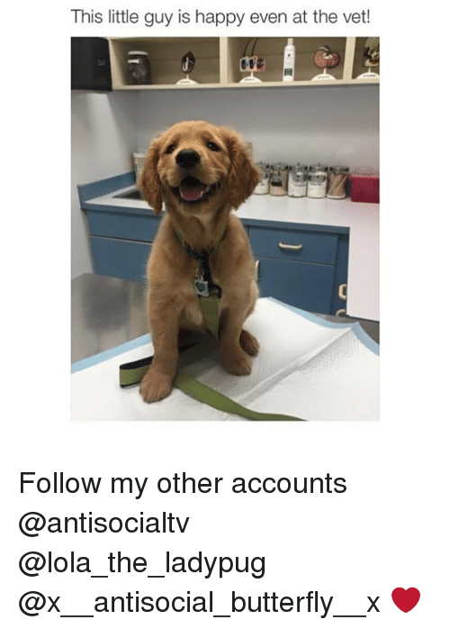 Memes, Butterfly, and Happy: This little guy is happy even at the vet! Follow my other accounts @antisocialtv @lola_the_ladypug @x__antisocial_butterfly__x ❤️