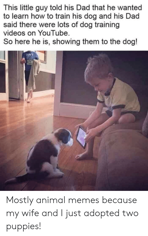 Puppies: This little guy told his Dad that he wanted  to learn how to train his dog and his Dad  said there were lots of dog training  videos on YouTube  So here he is, showing them to the dog!  ONT  THE Mostly animal memes because my wife and I just adopted two puppies!