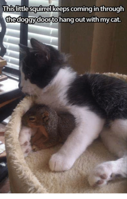 mycat: This little squirrel keeps coming in through  the doggy doortohang out with mycat.