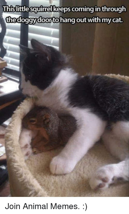 mycat: This little squirrel keeps coming in through  thedoggydoortohang out with mycat. Join Animal Memes. :)