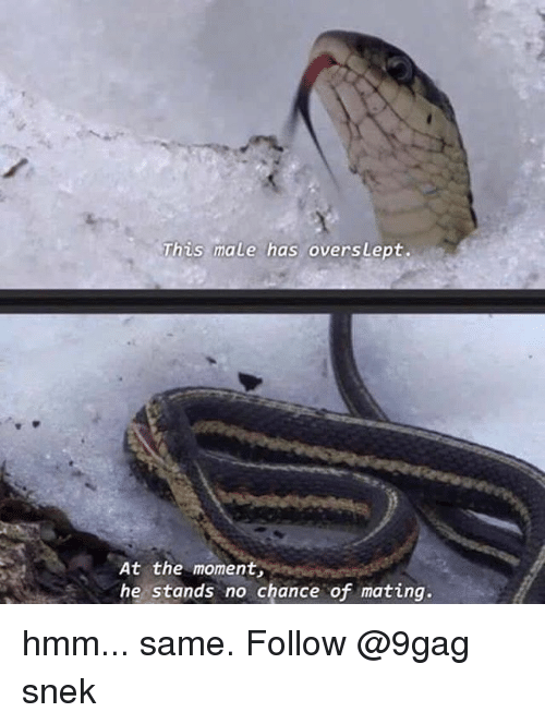 Overslept: This male has oversLept.  At the moment,  he stands no chance of mating. hmm... same. Follow @9gag snek