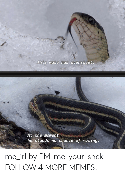Overslept: This male has overslept.  At the moment,  he stands no chance of mating. me_irl by PM-me-your-snek FOLLOW 4 MORE MEMES.