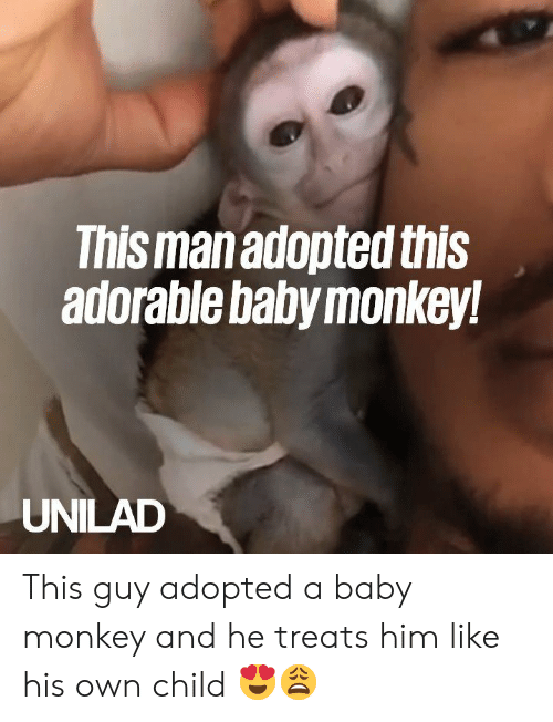 Dank, Monkey, and Adorable: This man adopted this  adorable baby monkey!  UNILAD This guy adopted a baby monkey and he treats him like his own child 😍😩