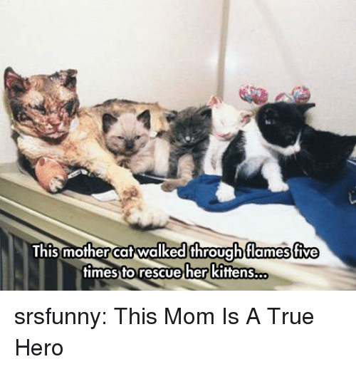 A True Hero: This mother cat walked throuahflames five  times to rescue her kittens... srsfunny:  This Mom Is A True Hero