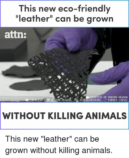 "Animals, Memes, and Forbes: This new eco-friendly  ""leather"" can be grown  attn:  COURTESY OF MODERN MEADOW  WITH MODERN MEADOW: THE BIOENGINEERING. . ""FORBES (2016)  WITHOUT KILLING ANIMALS This new ""leather"" can be grown without killing animals."