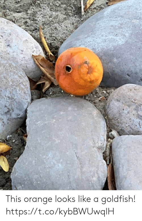 Goldfish, Orange, and Faces-In-Things: This orange looks like a goldfish! https://t.co/kybBWUwqlH