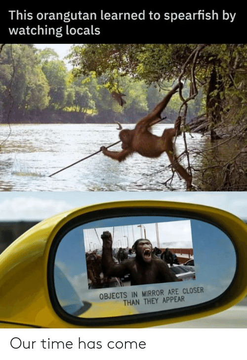 Has Come: This orangutan learned to spearfish by  watching locals  OBJECTS IN MIRROR ARE CLOSER  THAN THEY APPEAR Our time has come