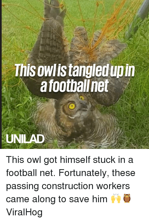 Dank, Football, and Construction: This owlis tangledup in  a footbalnet  UNILAD This owl got himself stuck in a football net. Fortunately, these passing  construction workers came along to save him 🙌🦉  ViralHog