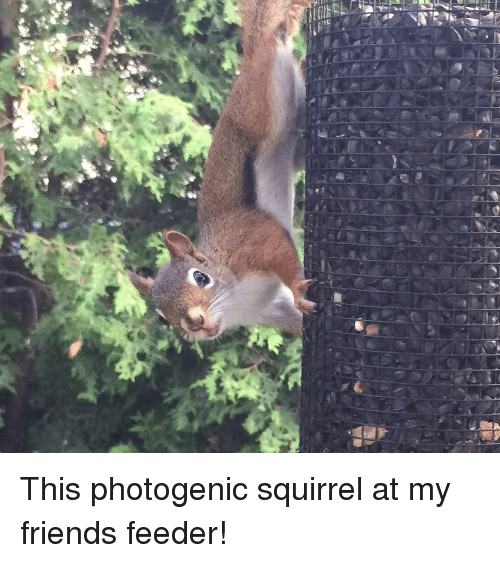 Friends, Squirrel, and Feeder: This photogenic squirrel at my friends feeder!