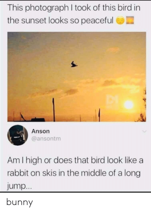 skis: This photograph I took of this bird in  the sunset looks so peaceful  Anson  @ansontm  Am I high or does that bird look like a  rabbit on skis in the middle of a long  jump... bunny