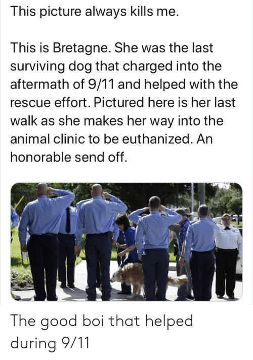 Her Last: This picture always kills me.  This is Bretagne. She was the last  surviving dog that charged into the  aftermath of 9/11 and helped with the  rescue effort. Pictured here is her last  walk as she makes her way into the  animal clinic to be euthanized. An  honorable send off. The good boi that helped during 9/11