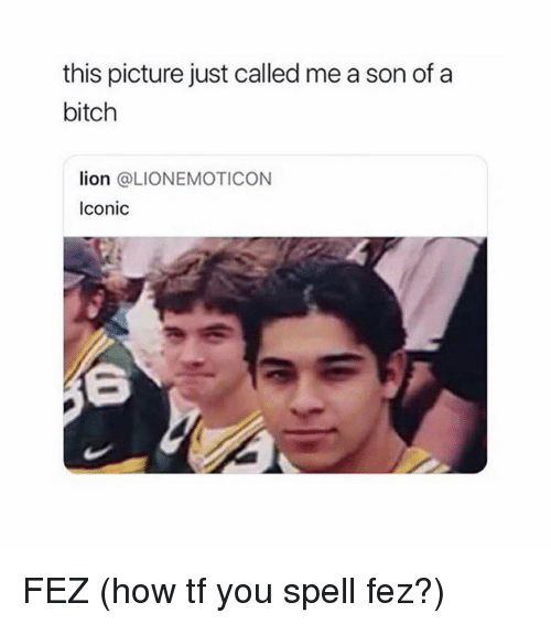 Bitch, Lion, and Girl Memes: this picture just called me a son of a  bitch  lion @LIONEMOTICON  Iconic FEZ (how tf you spell fez?)