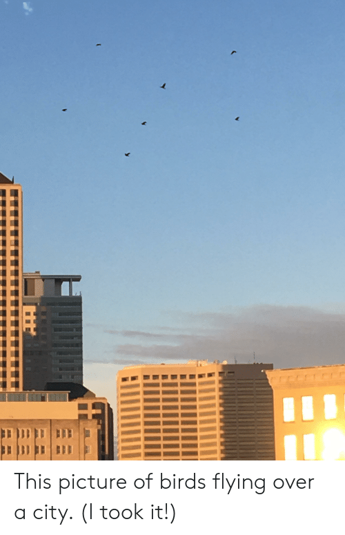 birds flying: This picture of birds flying over a city. (I took it!)