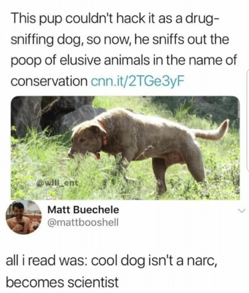 Animals, cnn.com, and Memes: This pup couldn't hack it as a drug-  sniffing dog, so now, he sniffs out the  poop of elusive animals in the name of  conservation cnn.it/2TGe3yF  Matt Buechele  @mattbooshell  all i read was: cool dog isn't a narc,  becomes scientist