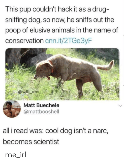 Animals, cnn.com, and Poop: This pup couldn't hack it as a drug-  sniffing dog, so now, he sniffs out the  poop of elusive animals in the name of  conservation cnn.it/2TGe3yF  Matt Buechele  @mattbooshell  all i read was: cool dog isn't a narc,  becomes scientist me_irl