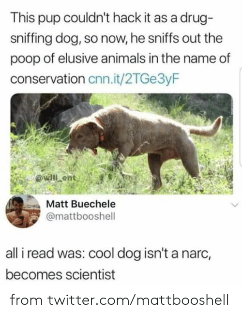 Conservation: This pup couldn't hack it as a drug-  sniffing dog, so now, he sniffs out the  poop of elusive animals in the name of  conservation cnn.it/2TGe3yF  @will ent  Matt Buechele  @mattbooshell  all i read was: cool dog isn't a narc,  becomes scientist from twitter.com/mattbooshell