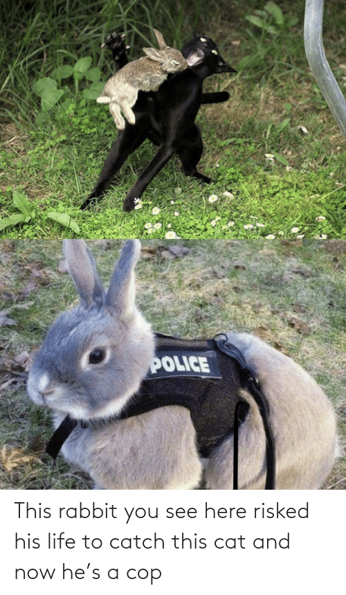 cop: This rabbit you see here risked his life to catch this cat and now he's a cop