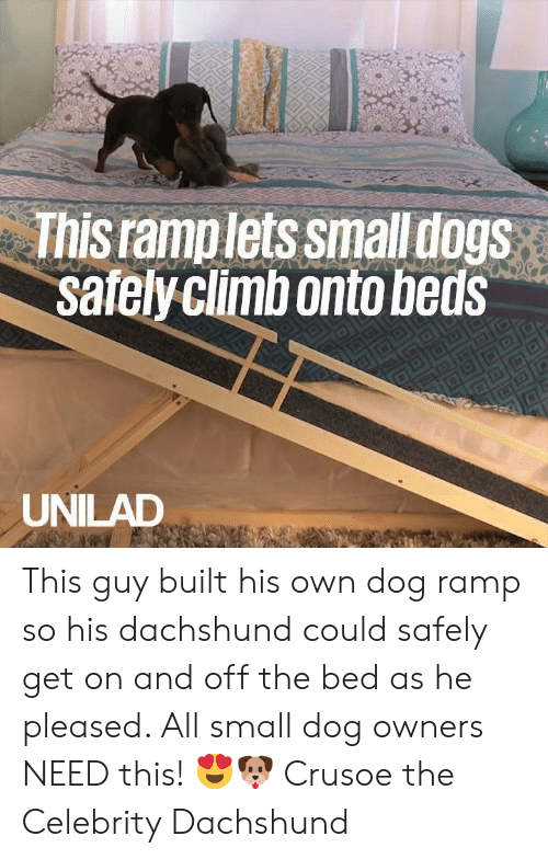 Dank, 🤖, and Dog: This ramplets smalldogs  safelyclimbonto beds  UNILAD This guy built his own dog ramp so his dachshund could safely get on and off the bed as he pleased. All small dog owners NEED this! 😍🐶  Crusoe the Celebrity Dachshund