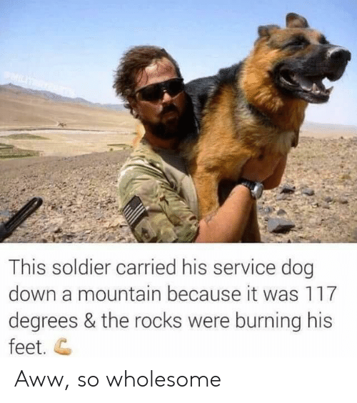 Aww, Wholesome, and Feet: This soldier carried his service dog  down a mountain because it was 117  degrees & the rocks were burning his  feet. C Aww, so wholesome