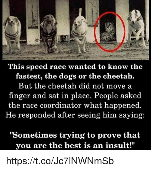 "Dogs, Memes, and Best: This speed race wanted to know the  fastest, the dogs or the cheetah.  But the cheetah did not move a  finger and sat in place. People asked  the race coordinator what happened.  He responded after seeing him saying:  ""Sometimes trying to prove that  you are the best is an insult!"" https://t.co/Jc7lNWNmSb"