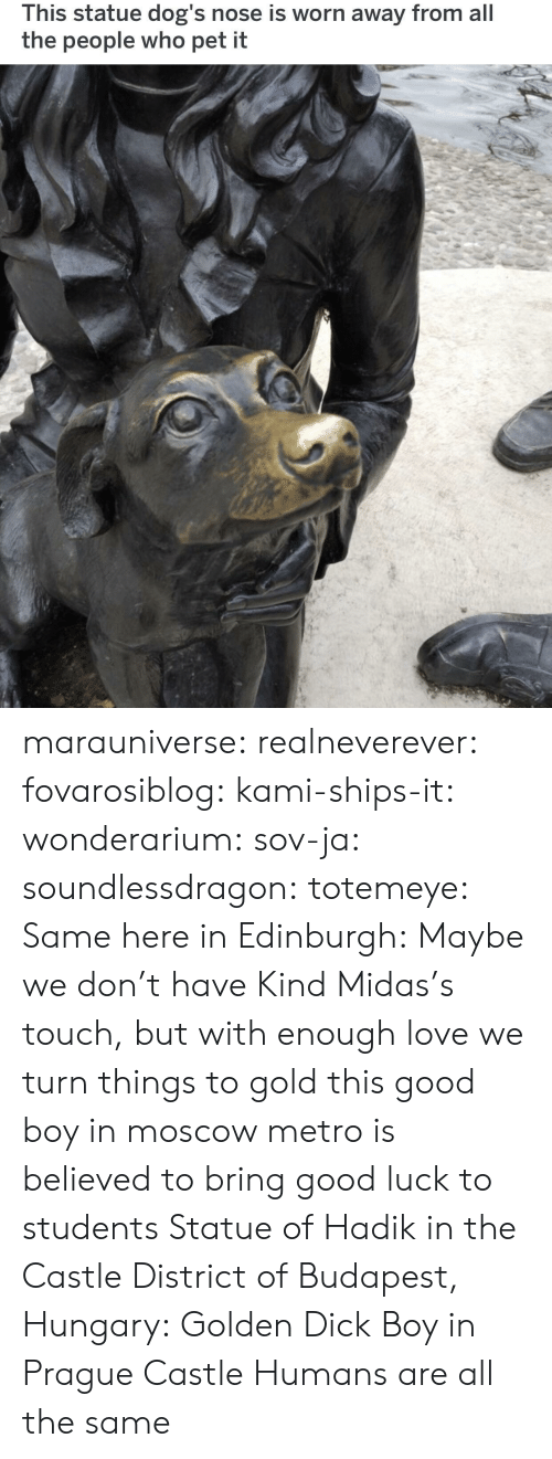 Dogs, Love, and Tumblr: This statue dog's nose is worn away from all  the people who pet it marauniverse: realneverever:   fovarosiblog:  kami-ships-it:  wonderarium:  sov-ja:  soundlessdragon:  totemeye:  Same here in Edinburgh:  Maybe we don't have Kind Midas's touch, but with enough love we turn things to gold  this good boy in moscow metro is believed to bring good luck to students    Statue of Hadik in the Castle District of Budapest, Hungary:  Golden Dick Boy in Prague Castle   Humans are all the same