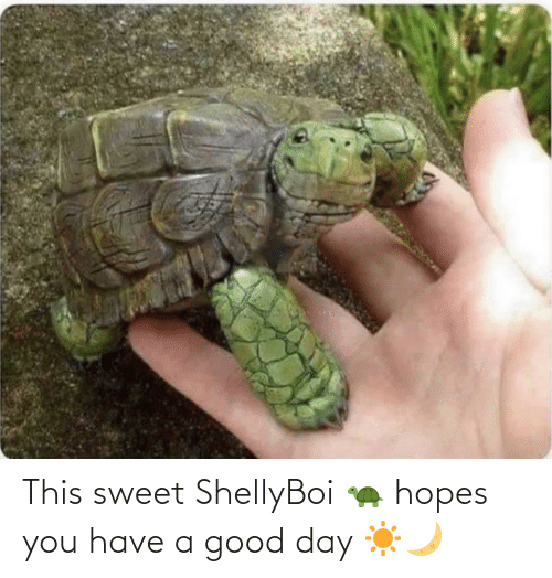 sweet: This sweet ShellyBoi 🐢 hopes you have a good day ☀️🌙