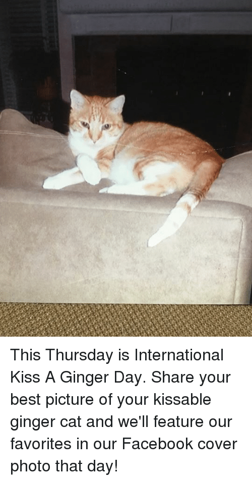 Memes, Best Pictures, and 🤖: This Thursday is International Kiss A Ginger Day.  Share your best picture of your kissable ginger cat and we'll feature our favorites in our Facebook cover photo that day!