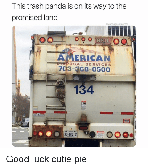cutie pie: This trash panda is on its way to the  promised land  @cabbagecatmemes  AMERICAN  DTSPOSAL SERVICES  7C13- 68-0500  134  33482 Good luck cutie pie