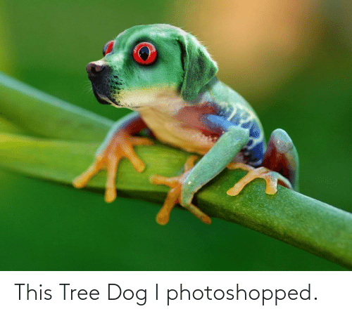 photoshopped: This Tree Dog I photoshopped.