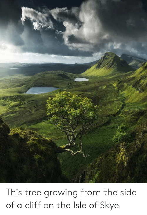 Tree, Skye, and Side: This tree growing from the side of a cliff on the Isle of Skye