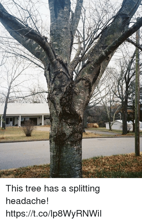 Tree, Faces-In-Things, and This: This tree has a splitting headache! https://t.co/lp8WyRNWiI