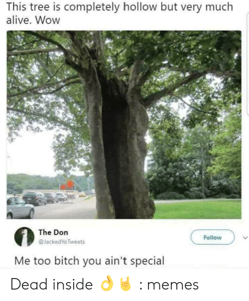 Dead Inside Meme: This tree is completely hollow but very much  alive. Wow  The Don  Follow  JackedYo Tweets  Me too bitch you ain't special Dead inside 👌🤘 : memes