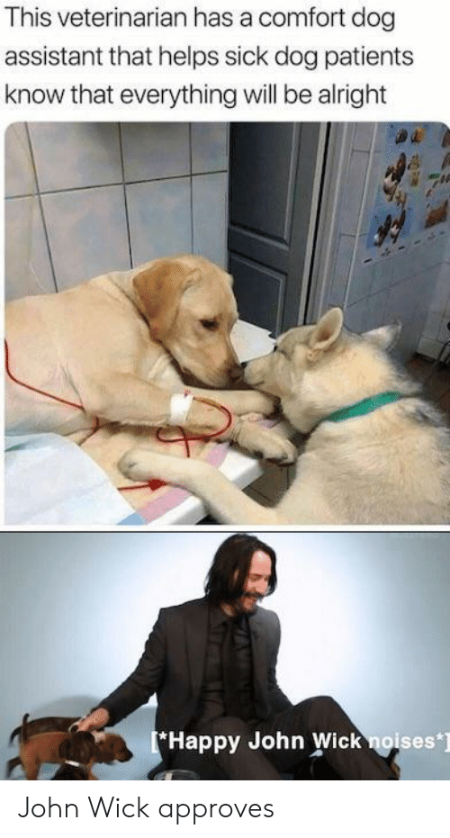 Veterinarian: This veterinarian has a comfort dog  assistant that helps sick dog patients  know that everything will be alright  Happy John Wick noises] John Wick approves