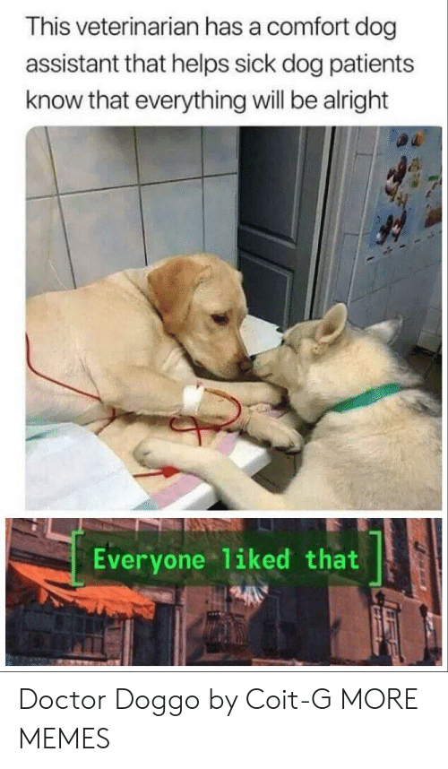 Veterinarian: This veterinarian has a comfort dog  assistant that helps sick dog patients  know that everything will be alright  Everyone 1iked that Doctor Doggo by Coit-G MORE MEMES
