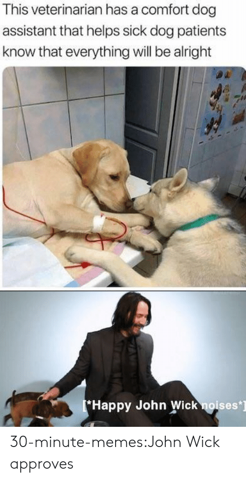 Veterinarian: This veterinarian has a comfort dog  assistant that helps sick dog patients  know that everything will be alright  Happy John Wick noises] 30-minute-memes:John Wick approves