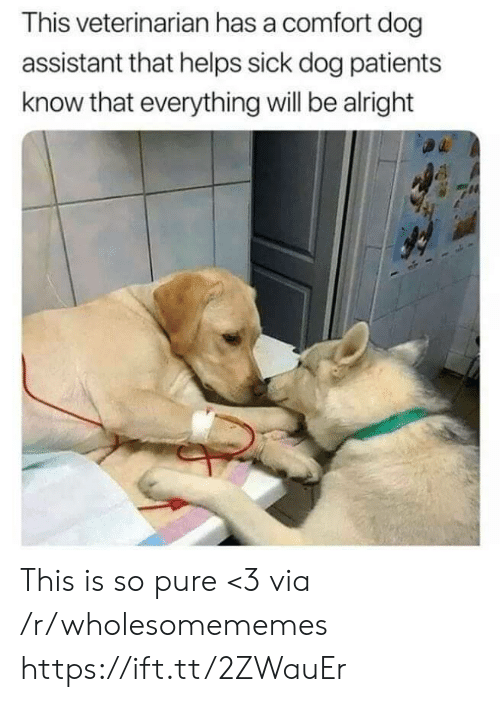Assistant: This veterinarian has a comfort dog  assistant that helps sick dog patients  know that everything will be alright This is so pure <3 via /r/wholesomememes https://ift.tt/2ZWauEr