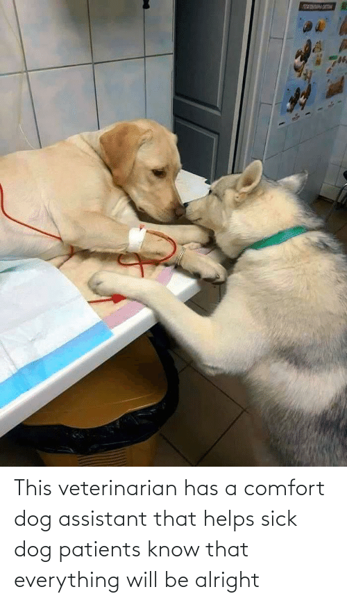 Helps: This veterinarian has a comfort dog assistant that helps sick dog patients know that everything will be alright