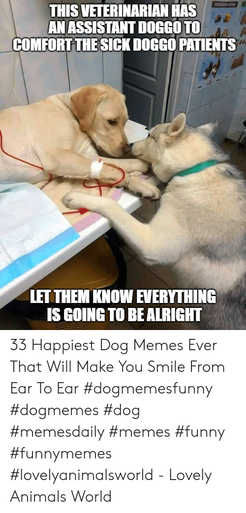 Animals, Funny, and Memes: THIS VETERINARIAN HAS  AN ASSISTANT DOGGOTO  COMFORT THE SICK DOGGO PATIENTS  LET THEM KNOW EVERYTHING  IS GOING TO BE ALRIGHT 33 Happiest Dog Memes Ever That Will Make You Smile From Ear To Ear #dogmemesfunny #dogmemes #dog #memesdaily #memes #funny #funnymemes #lovelyanimalsworld - Lovely Animals World