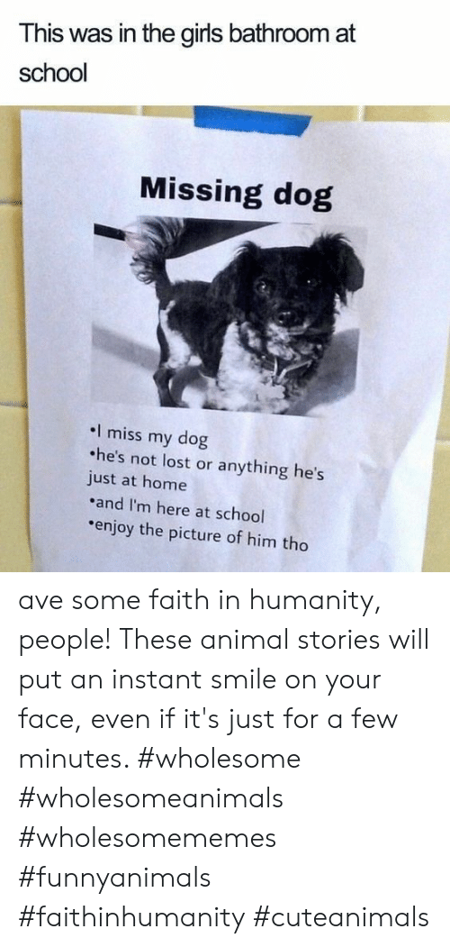 Miss My Dog: This was in the girls bathroom at  school  Missing dog  I miss my dog  he's not lost or anything he's  just at home  and I'm here at school  enjoy the picture of him tho ave some faith in humanity, people! These animal stories will put an instant smile on your face, even if it's just for a few minutes. #wholesome #wholesomeanimals #wholesomememes #funnyanimals #faithinhumanity #cuteanimals